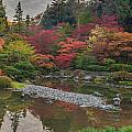 Soaring Fall Colors In The Arboretum by Mike Reid