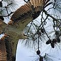 Soaring Hawk by Deborah Hughes