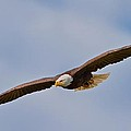 Soaring High by Dale J Martin