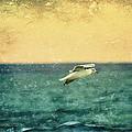 Soaring Seagull by Heidi Piccerelli