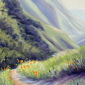 Soberanes Canyon  by Karin  Leonard