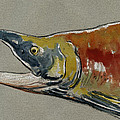Sockeye Salmon Head Study by Juan  Bosco