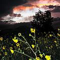 Socorro Sunset by Steven Ralser