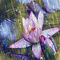 Water Lily Photography Tender Moments  by Carol F Austin