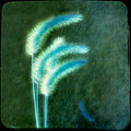 Soft Blue Grass by Gothicrow Images