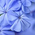 Soft Blue by Sabrina L Ryan