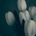 Soft Blue Tulips by Edward Fielding
