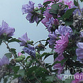 Soft Blues And Pink - Spring Blossoms by Miriam Danar