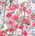 Soft Colors Of Spring by Carol Groenen