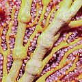 Soft Corals 1 by Dawn Eshelman