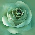 Soft Emerald Green Rose Flower by Jennie Marie Schell