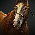Soft Focus Horse by Tommy Anderson