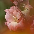 Soft Gladiolus by Heiko Koehrer-Wagner