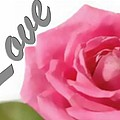 Soft Rose by Catherine Lott