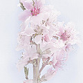Soft Spring by David and Carol Kelly