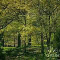 Soft Spring Light by William OBrien