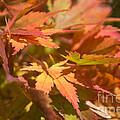Softly Autumn by Arlene Carmel