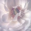 Softly by Peggy Hughes