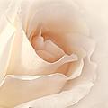 Softness Of A Peach Rose Flower by Jennie Marie Schell