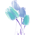 Softness Of  Blue And Teal Tulip Flowers by Jennie Marie Schell