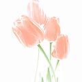 Softness Of Peach Tulip Flowers by Jennie Marie Schell