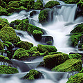 Sol Duc by Ginny Barklow