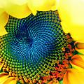 Solar Energy by Marianna Mills