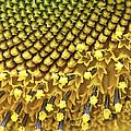 Solar Flair by Gary Holmes
