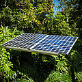 Solar Panel In Jungle by Blake Webster