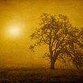 Solar Power by Randy Wood