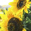 Solar Sunflowers by Jo-Anne Gazo-McKim