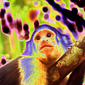 Solarized White-faced Monkey by Laurel Talabere
