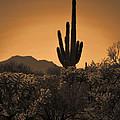 Solitary Saguaro by Deb Halloran