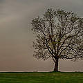 Solitary Tree by Dan Holland