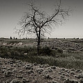 Solitary Tree by Daniel Hagerman