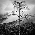 Solitary Tree by Dave Bowman