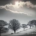 Solitude Of Coldness by Edmund Nagele