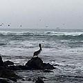 Solo Pelican by Aprelle Pierce