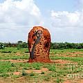 Somali Ant Hill - Beacon Of Hope by Morris Keyonzo