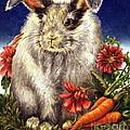 Some Bunny is a Fuzzy Wuzzy