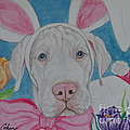 Some Bunny Says Spring Has Sprung by Megan Cohen
