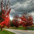Some Fall Colors by Mark Dodd