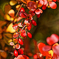 Some Red Berries II by Ronda Broatch