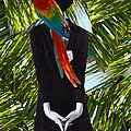 Some Tropic by Julia Luzia