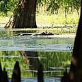 Some Turtles At Radium Springs Creek by Kim Pate