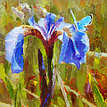 Alaskan Wild Iris And Blue Butterfly Flower Painting by Karen Whitworth