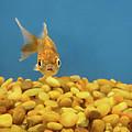 Something Fishy by Donna Blackhall