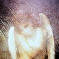 Sometimes The Angels Shiver by Gun Legler