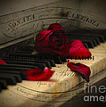 Sonata In Roses by Chris Armytage