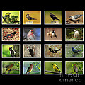 Song Birds Of Canada Collection by Inspired Nature Photography Fine Art Photography